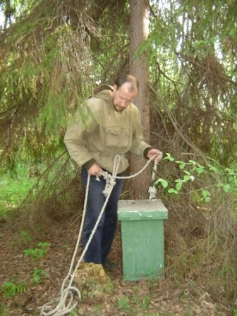 видео пчеловодство ловля роев видео